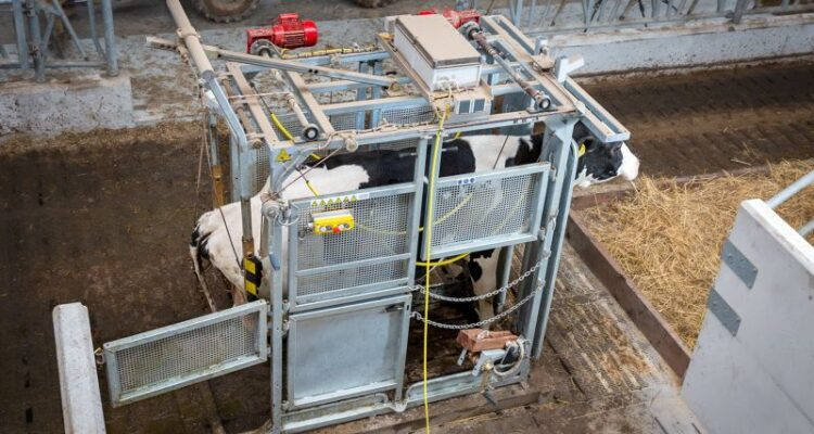 Lely Treatment Box